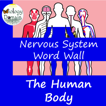 Human Body: Nervous System Word Wall Vocabulary Cards