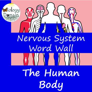 Human Body: Nervous System Vocabulary Cards