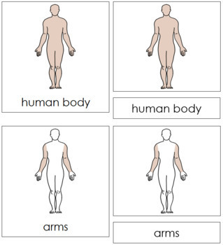 Human Body Nomenclature Cards