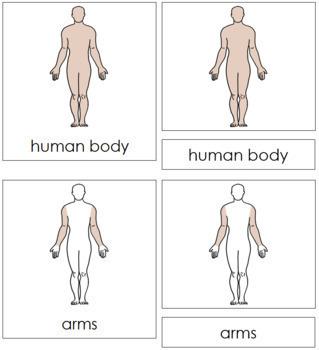 Human Body Nomenclature Cards