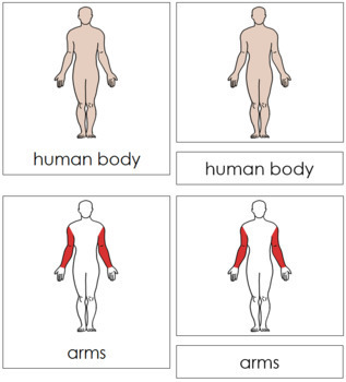 Human Body Nomenclature Cards (Red)