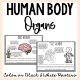Organs of the Human Body Posters