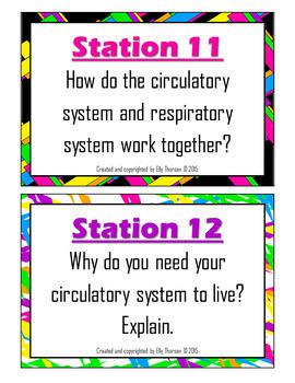 Human Body Organ System Assessment Bundle