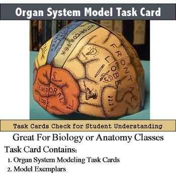 Human Body - Organ System Model Building Task Cards