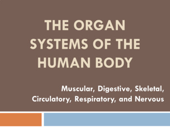 Human Body Systems Review PowerPoint