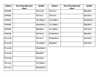 Human Body Organ System Relationship Worksheet by Lauren Stewart