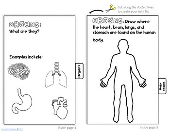Human Body Organization Flip Book Activity