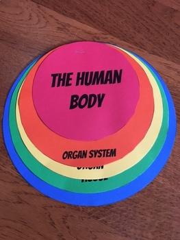 Human Body Organization Flip Book with Google Slides