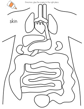 Human Body Organs Interactive Cut and Paste Worksheets by ...