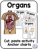 Human Body Organs Interactive Cut and Paste Worksheets