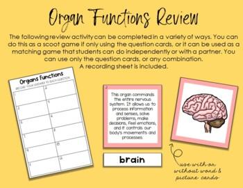 Human Body Organs 3 Part Cards