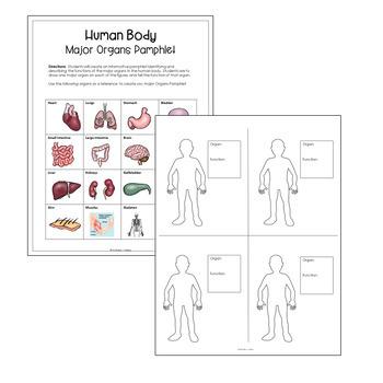Human Body Organs Pamphlet