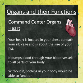 Human Body Organs and Their Functions Lesson