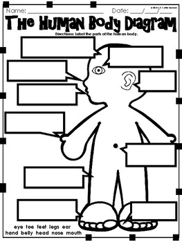 Human Body Parts Diagram