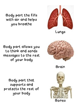 Human Body Parts and Function matching