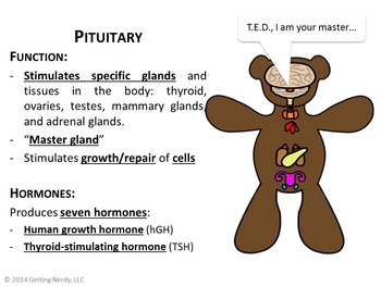 Reproductive & Endocrine Systems