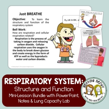 Human Body - Respiratory System - PowerPoint & Handouts {FREE}