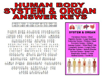 Human Body Puzzle (Systems and Organs)