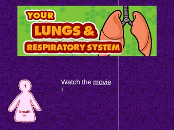 Human Body RESPIRATORY - The Lungs