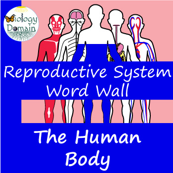 Human Body: Reproductive System Word Wall Vocabulary Cards