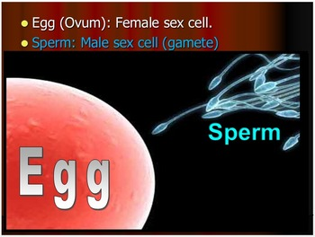 Human Body, Reproductive and Endocrine System Lesson Bundle