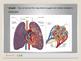 Human Body - Respiratory System