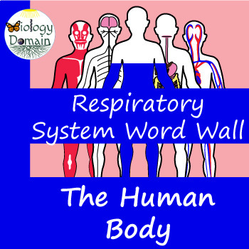 Human Body: Respiratory System Word Wall Vocabulary Cards
