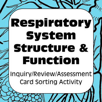 Respiratory System Structure & Function Card Sort & Assessment For High School