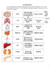 Human Body Review Activity