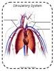 Human Body & Senses - Extended Standards