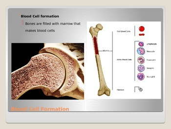 Anatomy - Human Body - Skeletal Sysem