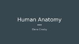 Human Body Skeletal System