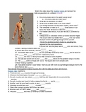 Human Body- Skeletal and Muscle System Videos and Questions