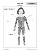 Human Body: Skeletal and Muscular Systems