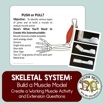 Skeletal and Muscular System - Joint Model