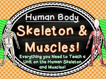 Human Body Skeleton and Muscles Unit 3 Weeks!