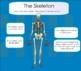 Human Body Smartboard Lesson