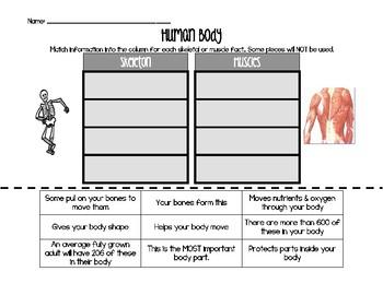 Skeleton & Muscle Sort & Paste