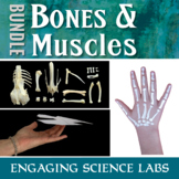 Human Body System: Bones and Muscles and Nerves 25 Activities
