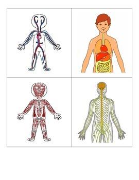 Human Body System Matching Cards & Matching Quiz