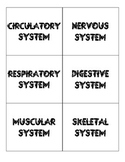Human Body System Matching Cards & Matching Quiz