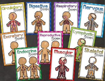 Human Body System Posters Primary