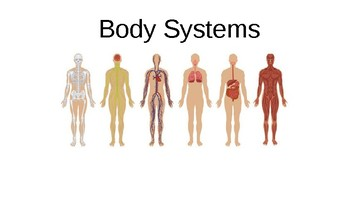 Human Body System Powerpoint