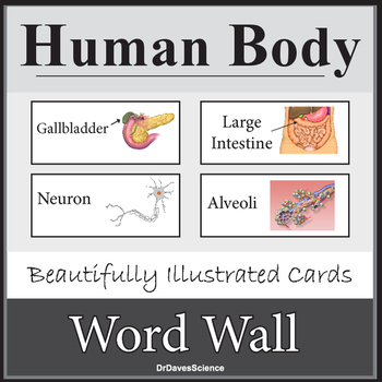 Human Body System Word Wall