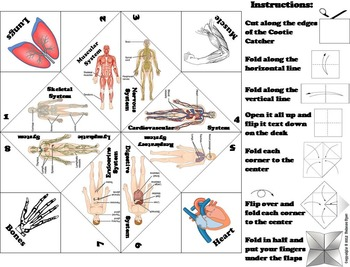 The Human Body Systems Activity/ Foldable