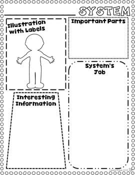 Human Body Systems - Digestive, Circulatory, Muscular, Respiratory, and More