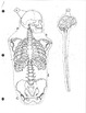 Human Body Systems Booklet