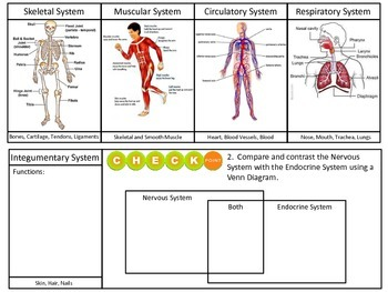 Human Body Systems Brochure