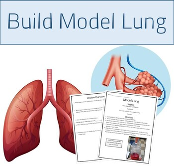 Human Organ Systems - Build a Model Lung