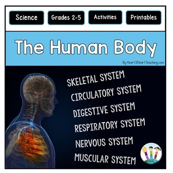Human Body Systems Bundle: Muscular, Skeletal, Digestive, Respiratory & More!